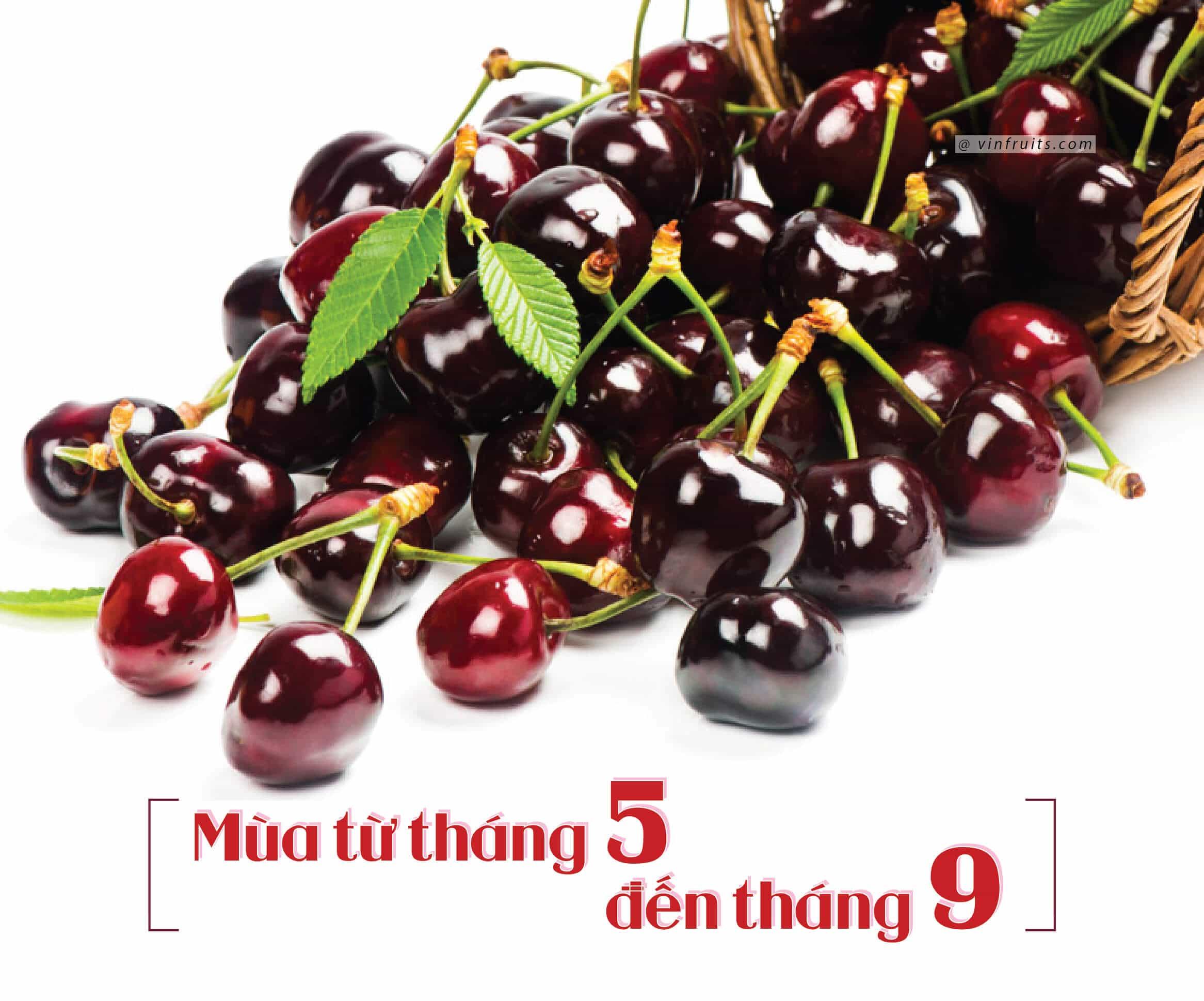Mua vu cherry My - vinfruits.com