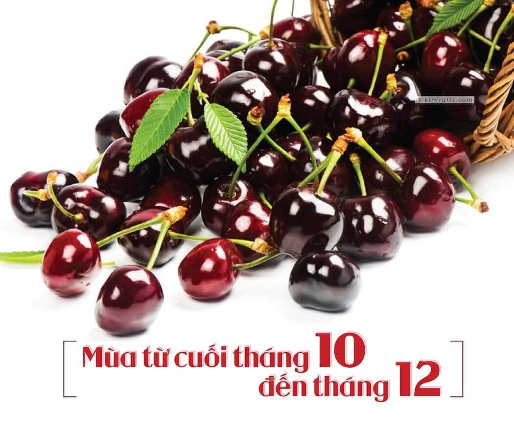 Mua vu cherry do Uc - vinfruits