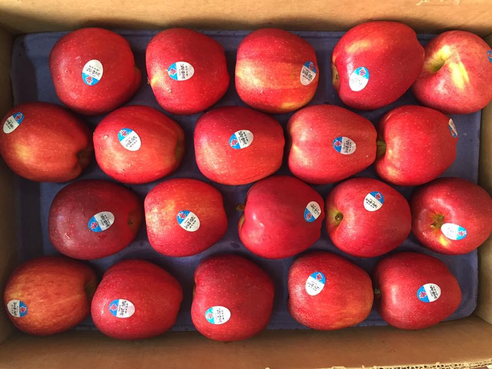 Táo Gala Mỹ nhập khẩu - Vinfruits.com