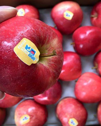 Táo Gala Pháp - Vinfruits.com