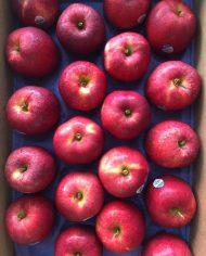 Thùng Táo Gala Mỹ nhập khẩu – Vinfruits.com