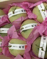 Dưa lưới Nhật – Vinfruits.com