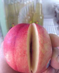 Xuân đào trắng Úc – Vinfruits.com
