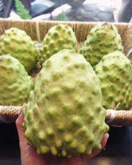 Mãng cầu Đài Loan – Vinfruits.com