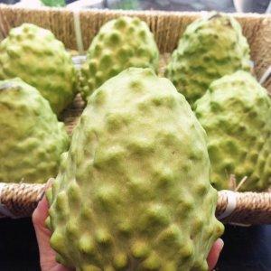 Mãng cầu Đài Loan - Vinfruits.com