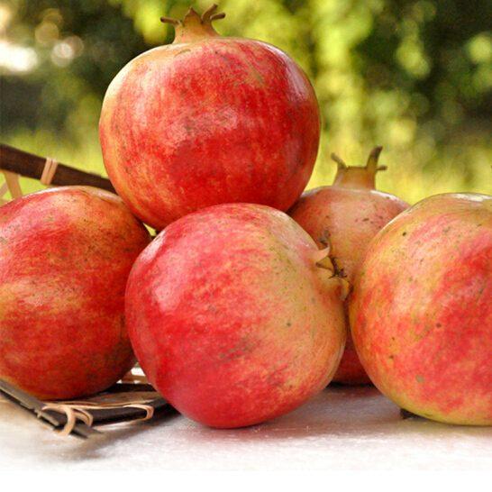 Luu Tay Ban Nha - vinfruits.com 2