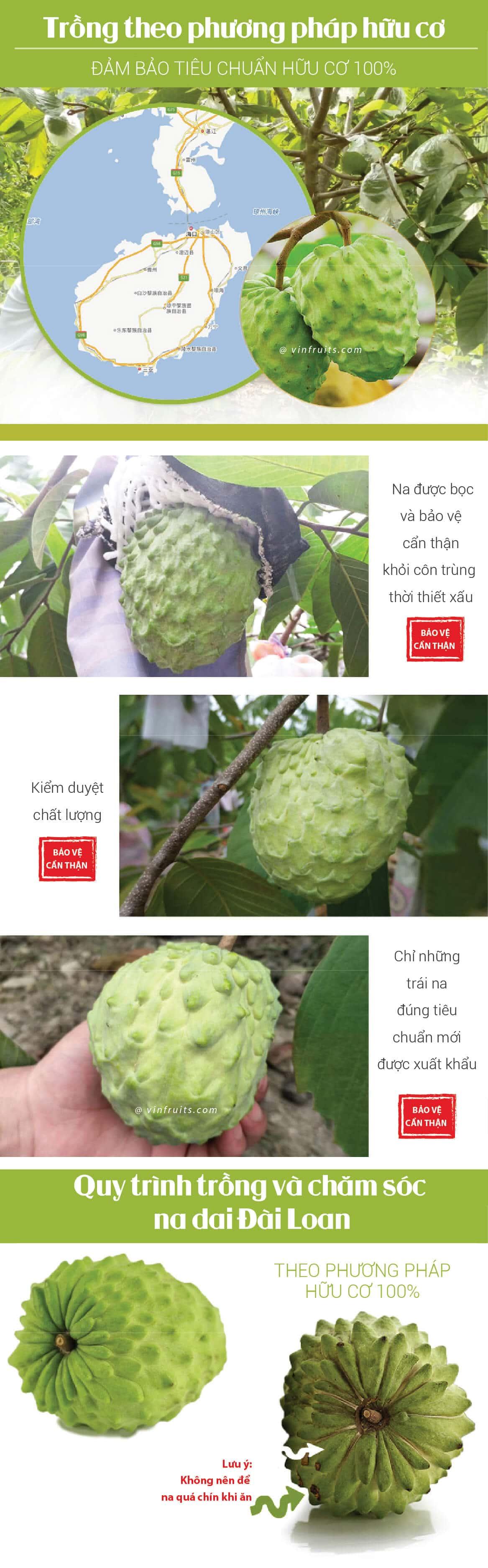 Na dai Dai Loan - vinfruits.com 3