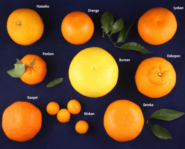 Các loại cam, quýt ở Nhật