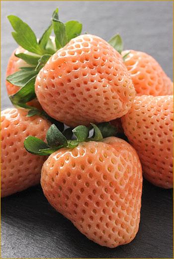 Dau anh dao Nhat - vinfruits.com