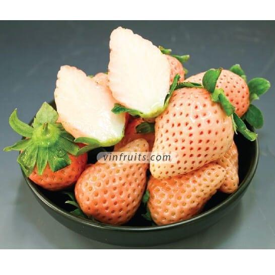 Dau tay Bach Tuyet Nhat Ban - vinfruits 4