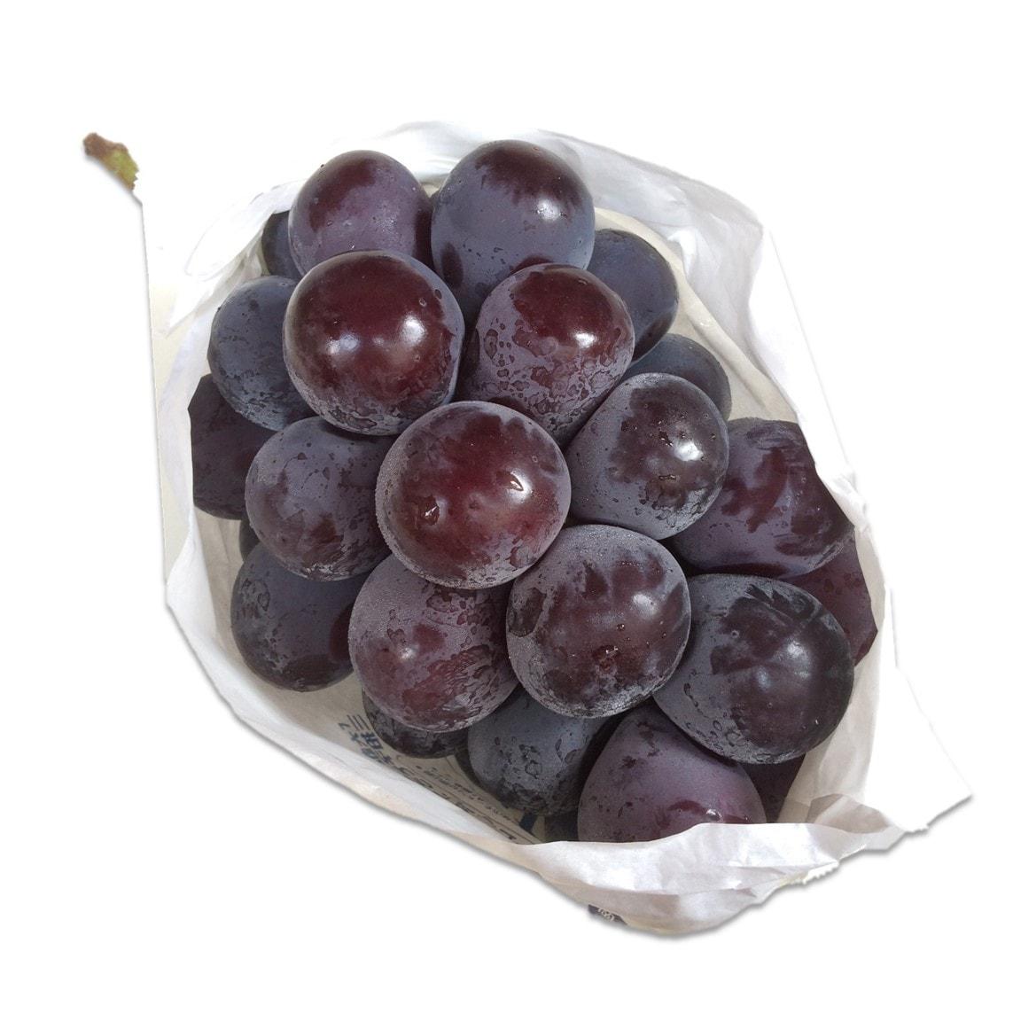 Giống nho đen New-Pione-Grapes