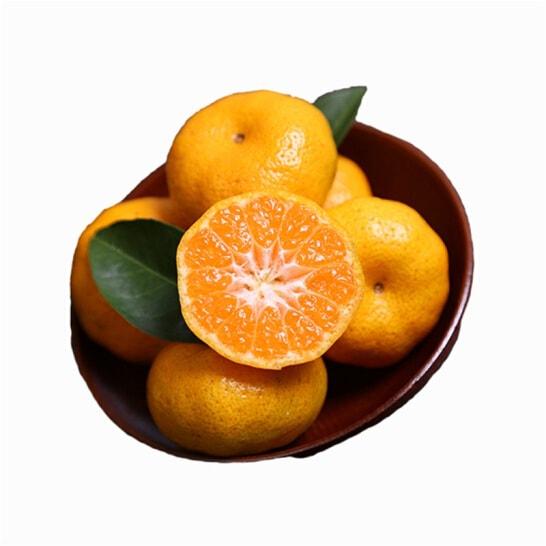 Quýt Sentoka Nhật - vinfruits.com 3