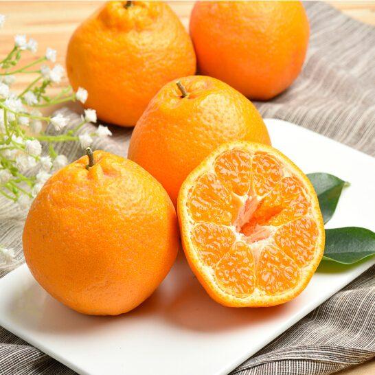 Quýt chum Nhật Bản - vinfruits.com 2