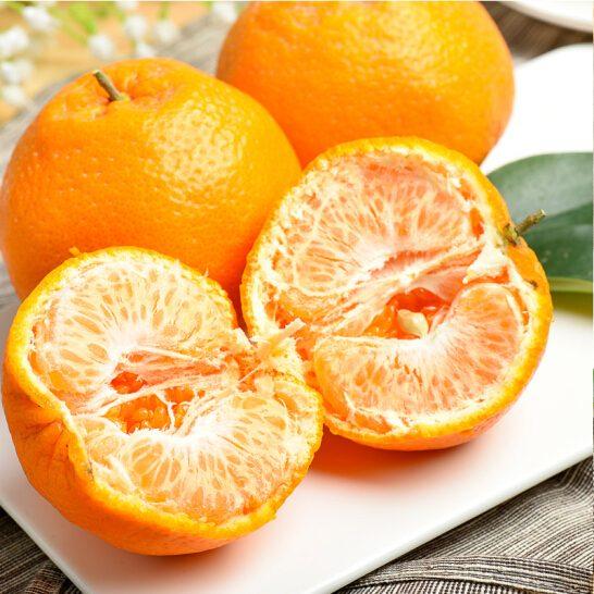 Quýt chum Nhật Bản - vinfruits.com 3