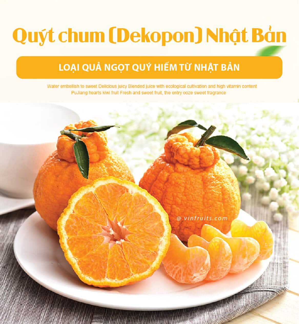 Quy chum Nhat Ban - vinfruits.com 1