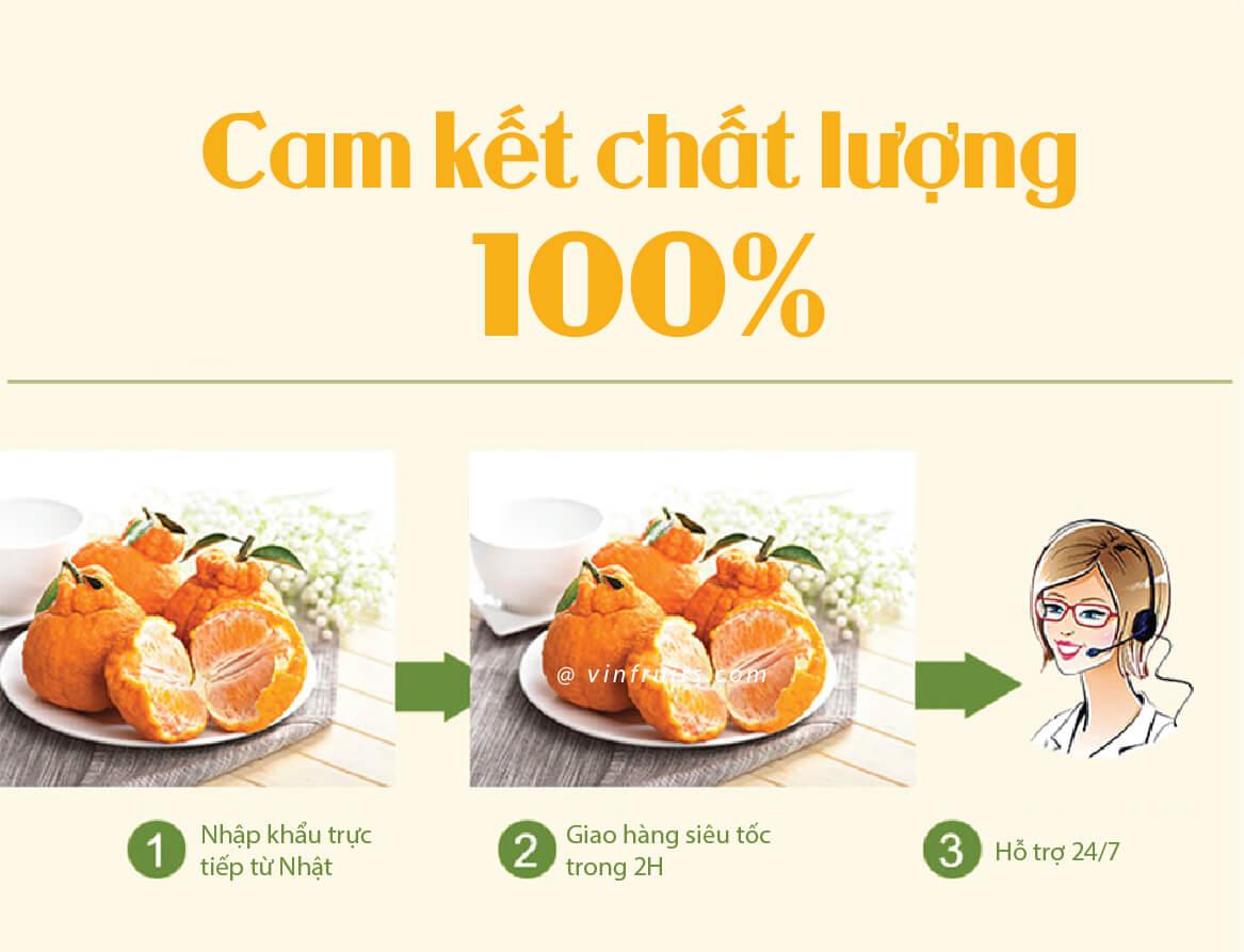 Quy chum Nhat Ban - vinfruits.com 3