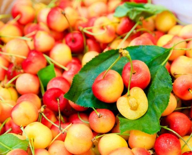 Cherry vàng rainer