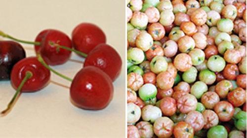 Sơ ri và trái cherry