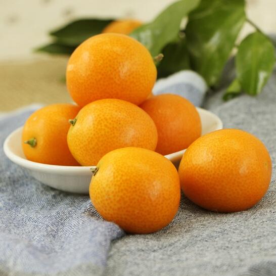 Tắc Nhật - vinfruits.com 6