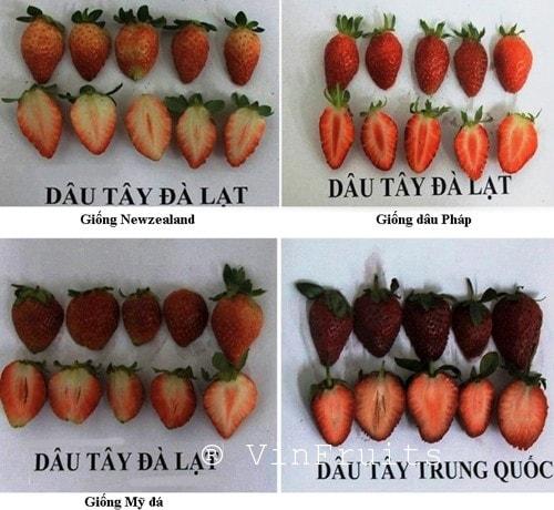 dau-tay-da-lat-va-trung-quoc-vinfruits