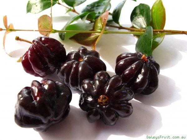 Cherry đen - VinFruits