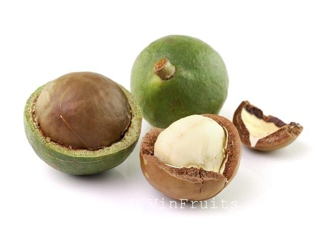 Hạt MACADAMIA - Vinfruits