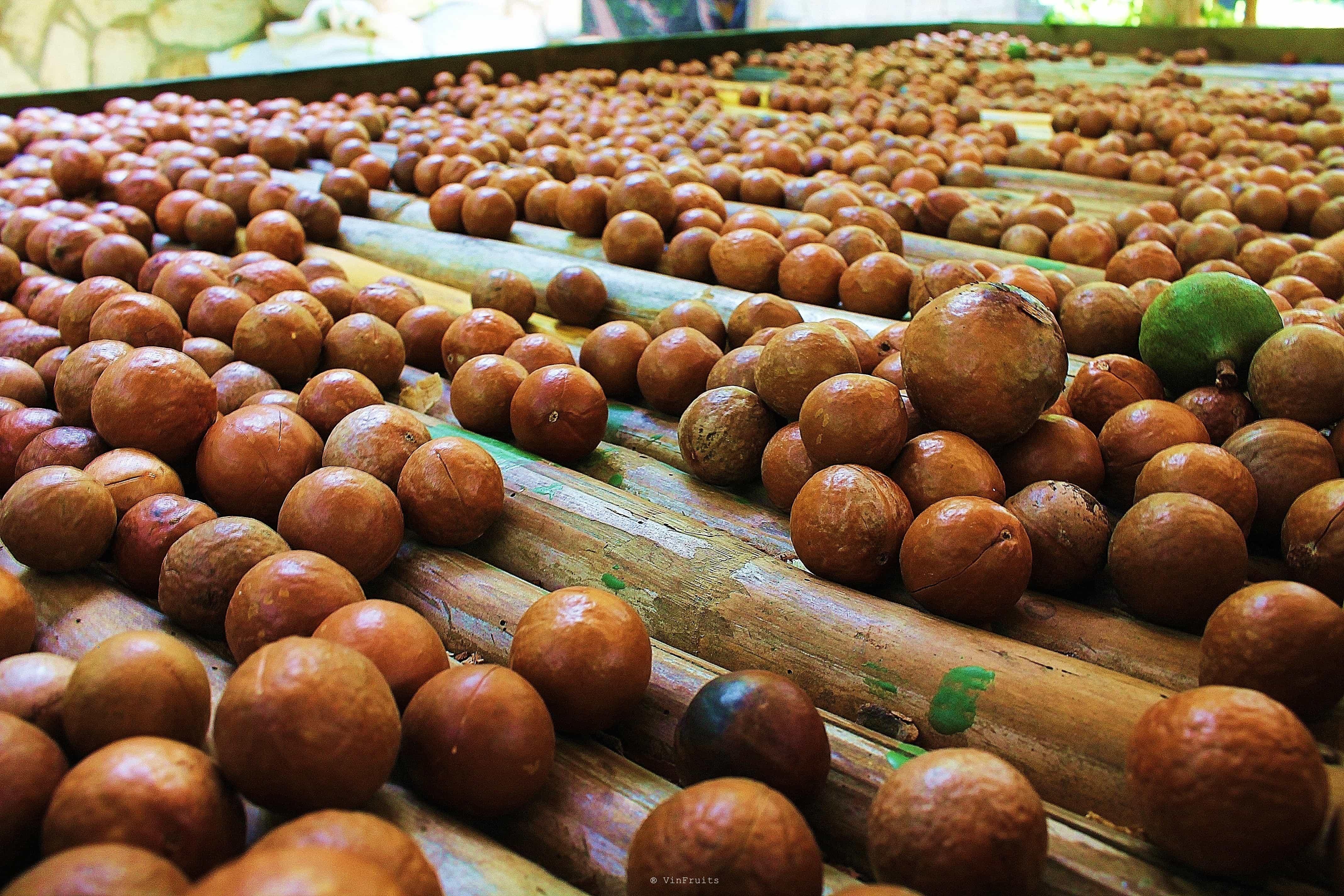 Quả macca Úc - Vinfruits