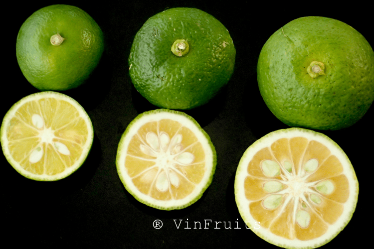 Sudachi, một loài trái cây Nhật bụi thuộc họ cam quýt, trông giống quả chanh và có vị chua tương tự yuzu.