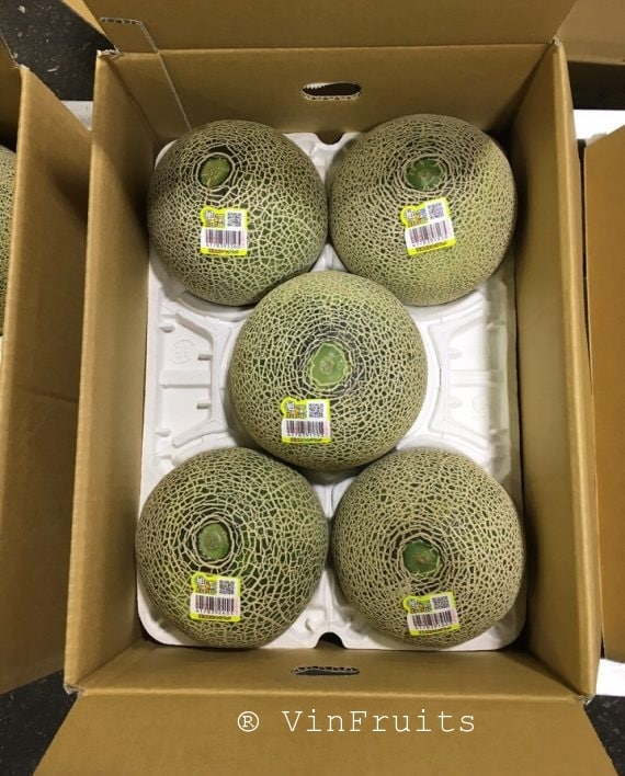 Dưa lưới Higo Green Nhật - Vinfruits