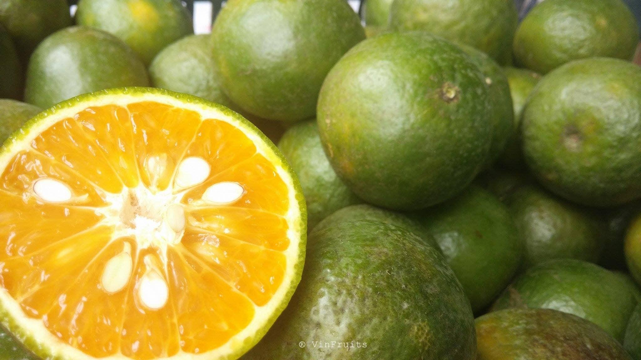 Cách lựa chọn cam ngon - Vinfruits
