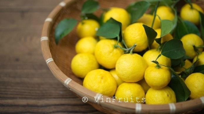 Quả Yuzu Nhật Bản - Vinfruits