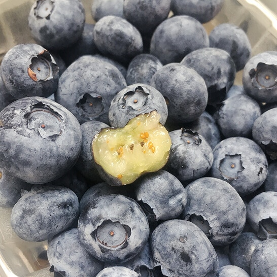 Viet quat nam phi - vinfruits.com 5