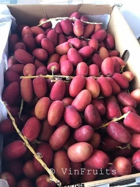 Chà là tươi Ấn Độ - Vinfruits