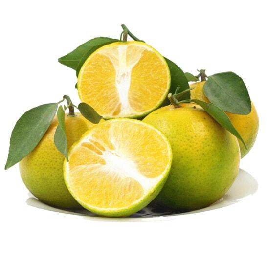 Cam xoan Lai Vung - vinfruits.com 1