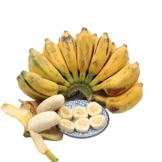 Chuoi su Viet Nam - vinfruits.com 1