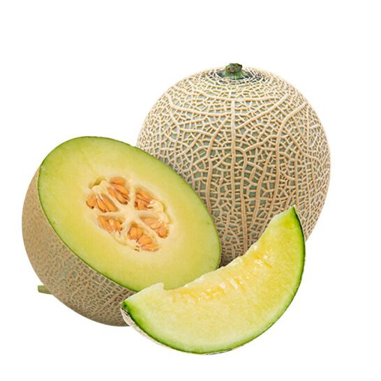 Dua luoi giong Nhat - vinfruits.com 4