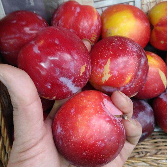 Man do Uc - vinfruits.com 5