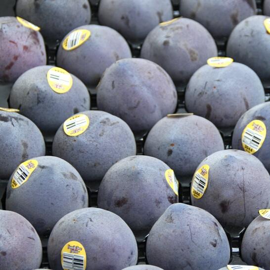 Man khung long den My - vinfruits.com 4