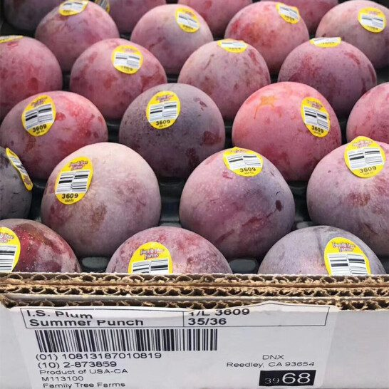 Man khung long do My - vinfruits.com 7
