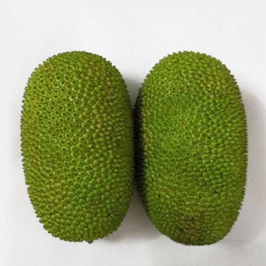 Mit To Nu - vinfruits.com 2
