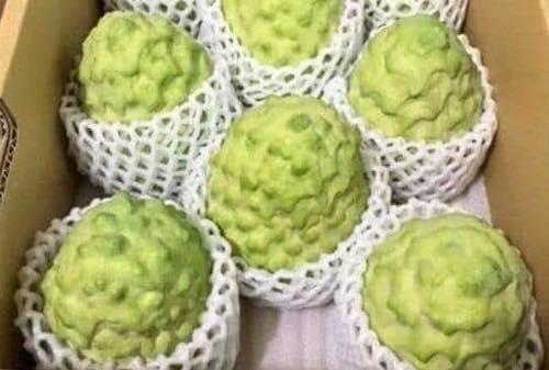 Na dai Dai Loan - vinfruits