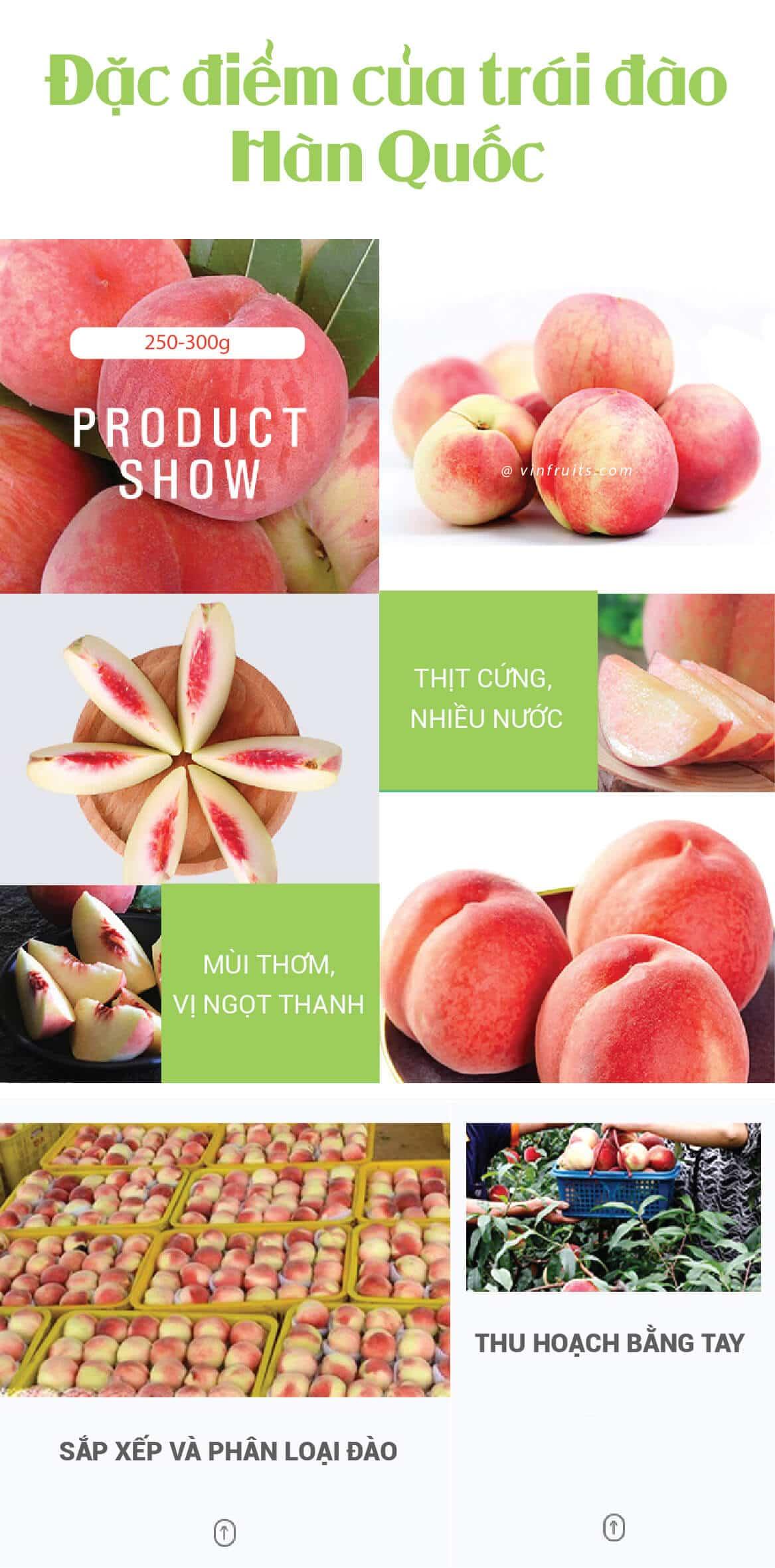 Qua dao Han Quoc - vinfruits 2