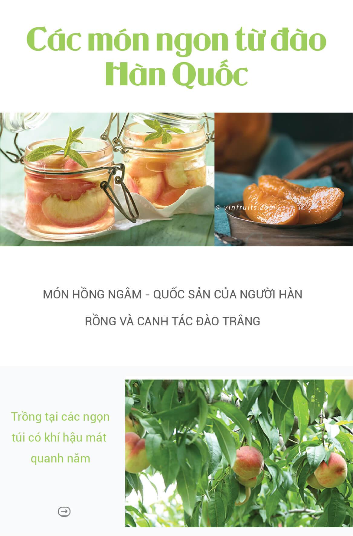 Qua dao Han Quoc - vinfruits 3