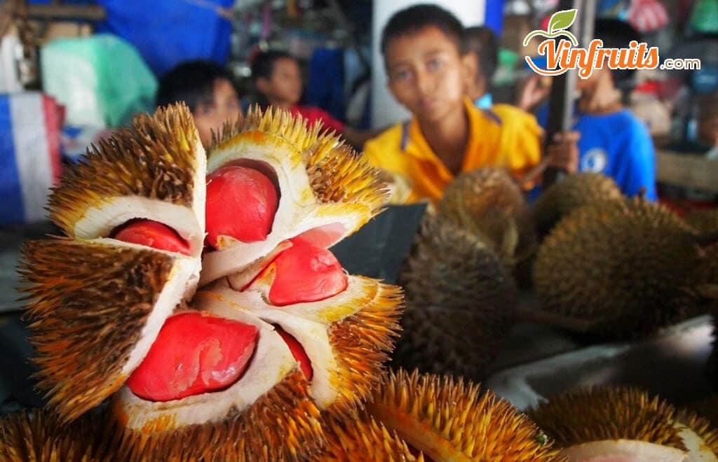 Sầu riêng ruột đỏ nứt vỏ khi chín, để lộ múi sầu đỏ tươi hấp dẫn - Vinfruits