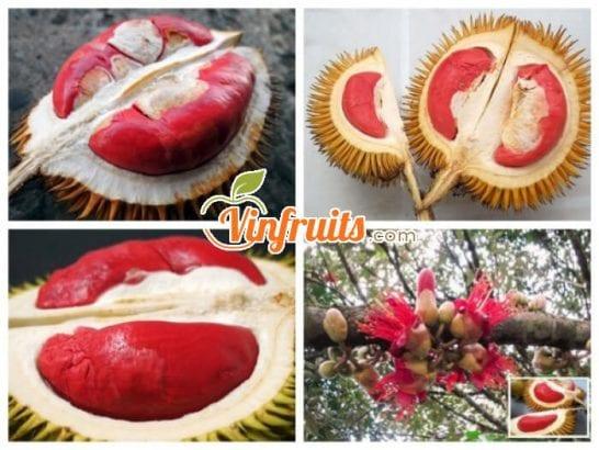 Sầu riêng ruột đỏ nặng từ 3 - 5kg - Vinfruits