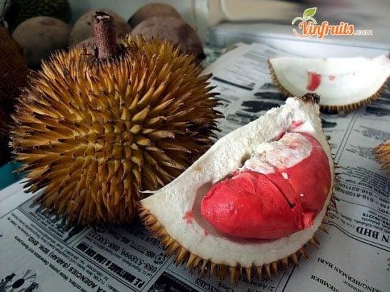 Múi sầu riêng ruột đỏ hơi khô nhưng cơm dẻo, hạt nhỏ - Vinfruits
