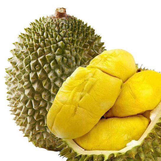 Sau rieng Cai Mon - vinfruits.com 3