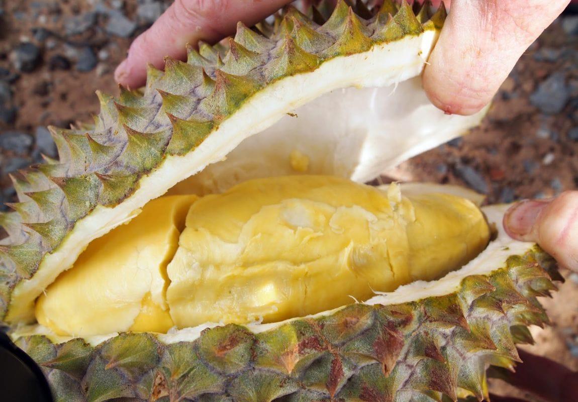 Sau rieng KAMPOT Campuchia - vinfruits