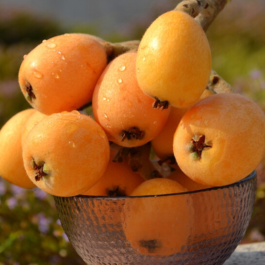 Thanh tra - vinfruits.com 3