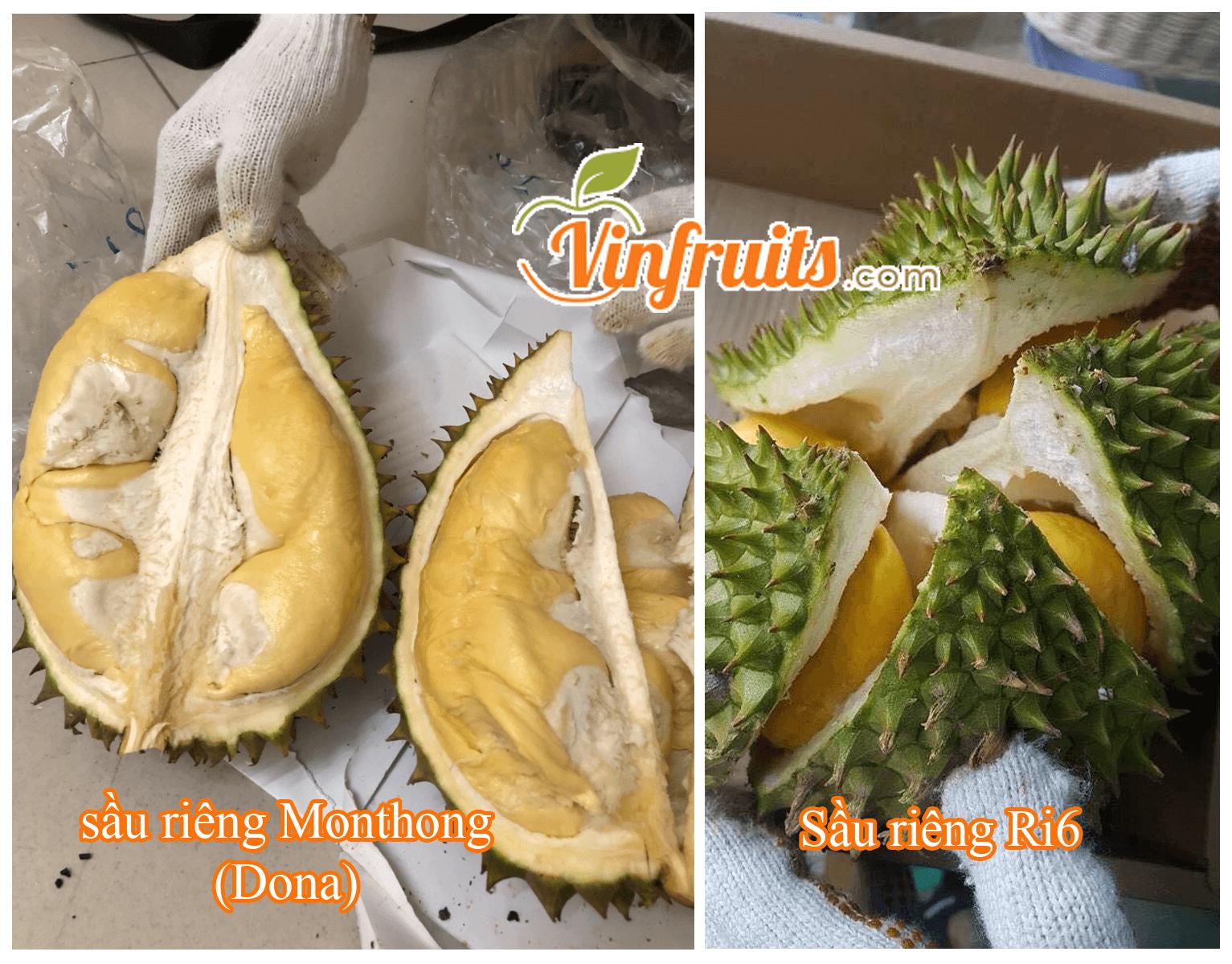 So sánh sầu riêng Monthong (Dona) & sầu riêng Ri6 - Vinfruits